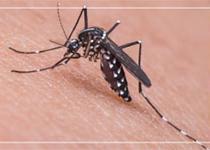 Le moustique tigre : ce qu'il faut savoir sur ce moustique qui progresse en France !