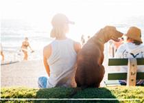 Maître stressé, chien stressé : décryptage et solutions anti-stress