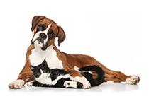 Vermifuge : pourquoi, comment et quand protéger son animal ?