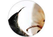 Piqûre d'Insectes