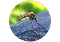Large choix de produits anti moustique