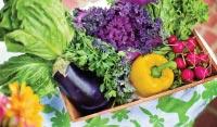 Drainer son corps avec des fruits et légumes